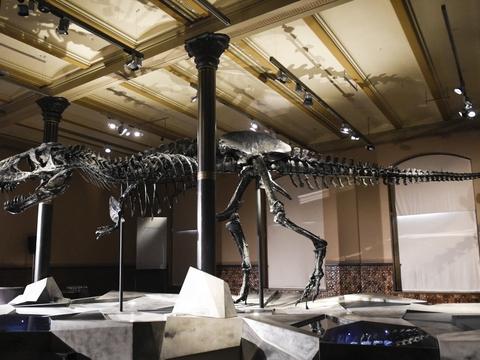 Fossilet af tyrannosaurus rexen er danskejet og opkaldt Tristan Otto efter ejernes sønner. Det har en længde på 12 meter, en højde på 3,4 meter og har gabet fuld af sylespidse tænder. (Arkivfoto).