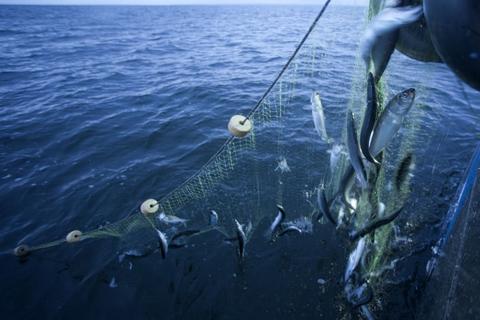 Danske fiskere i den tyske del af Østersøen får lov at beholde flere af de fladfisk, som de fanger, som følge af nye aftale med Tyskland. (Arkivfoto)
