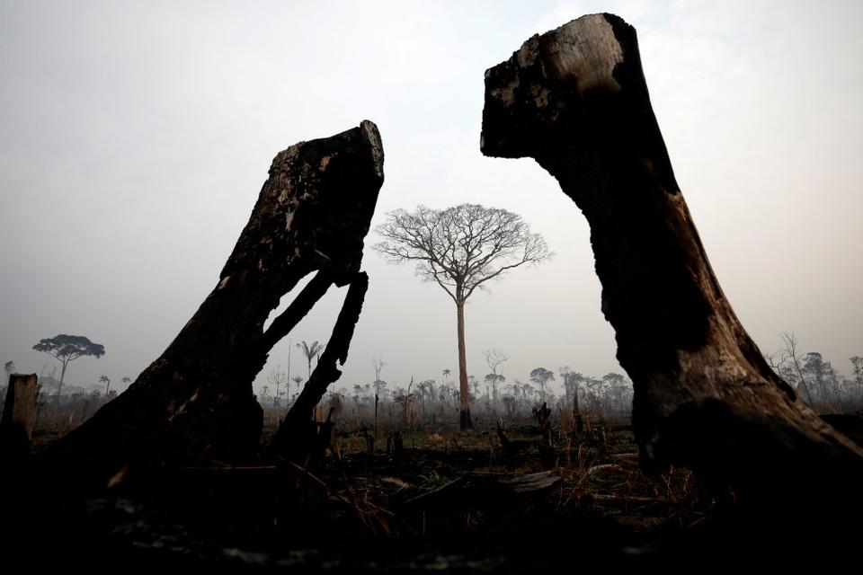 """Brændte træer i Amazon-junglen, hvis bevarelse har stor betydning for kampen mod klimaforandringer. Brasiliens præsident, Jair Bolsonaro, har lovet at åbne Amazonas op for mineselskaber, hvilket har fået oprindelige folk til at beskylde den politiske leder for """"folkedrab, kulturdrab og miljødrab""""."""