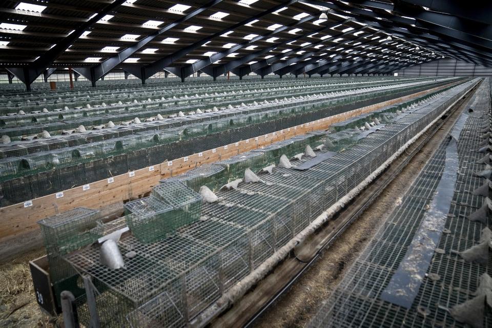 Landets minkfarme står efterhånden helt tomme. Her er det en kombineret minkfarm og pelseri i Ørnhøj. (Arkivfoto)